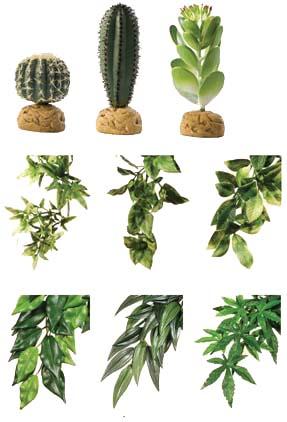 Zoolandia gady rośliny
