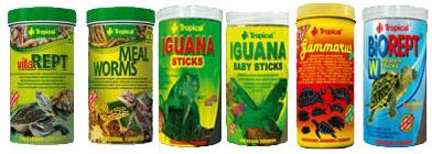 Zoolandia gady tropikal