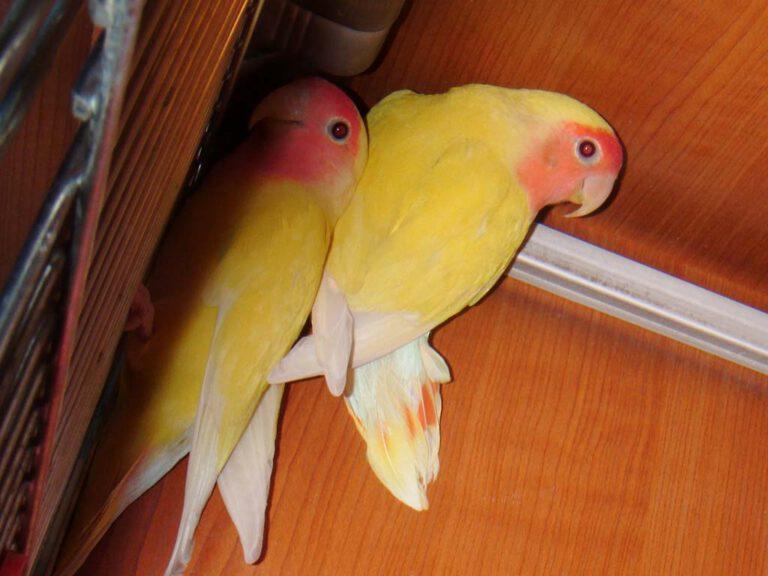 Zoolandia galeria ptaki