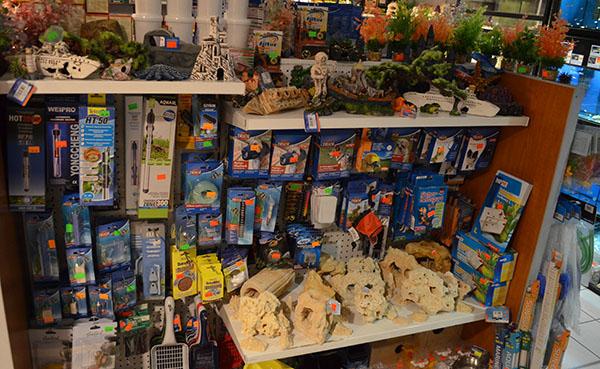 Zoolandia ryba dekoracje